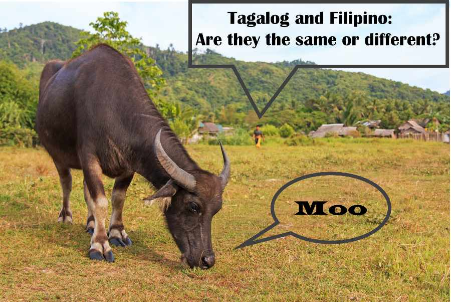Tagalog and Filipino: Are they the same or different?